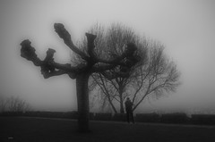Composición de sentimientos (pitin_os) Tags: niebla fog árboles monocromo bn ngc