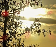 Silhouetted Tree Branch Silhouette (Gilli8888) Tags: cresswell cresswellponds northumberland northeast countryside nikon p900 coolpix sunset trees silhouette silhouettephotography farm sun branches