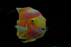 Aquarium #7 ⭐ (Franco Gavioli) Tags: 2016 fragavio sicilia sicily siracusa francesco gavioli canoneos600d canonef50mmf18ii ortigia fish pesce fontearetusa acquario aquarium syracuse