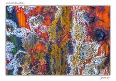 Colorful Devastation (Danial Thiessen) Tags: seven six photography beauty beautiful old forgotten colors colorful bright abstract sony cybershot rx10iii rx10m3 rust rusted rusty orange green pink white yellow macro closeup