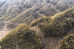 sea mist (SimonMastersPhotography) Tags: grass dunegrass dunes sand green scenic nobody light
