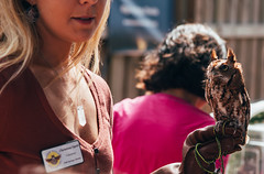 20190216-00005.jpg (tristanloper) Tags: tristanloper creativecommons florida gainesvilleflorida gainesvillefl gainesville paynesprairie birds bird birding birdofprey predator owl falcon screechowl firstmagnitudebrewing pintsandpredators audubonsociety wildbirdsunlimited wildliferehabilitation