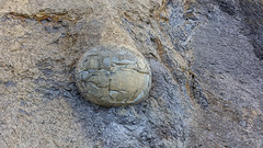 190315Stones5121w (GeoJuice) Tags: dunedin moeraki boulders concretions beach geography geology