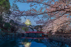 Himeji (Isaac Chiu_TW) Tags: colortemperature japan sakura himeji landscapes flowers cherryblossoms april canon canonphotography 姬路城 夜桜 日落色溫 桜花