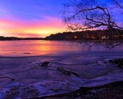 Ice (OlgaL2018) Tags: stockholm sweden winter ice tree sunset