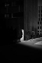 early spring's sun (gato-gato-gato) Tags: apsc europa fuji fujifilmx100f switzerland x100f zurich autofocus flickr gatogatogato pocketcam pointandshoot wwwgatogatogatoch black white schwarz weiss bw blanco negro monochrom monochrome blanc noir streetphotography street strasse strase onthestreets streettogs streetpic streetphotographer mensch person human pedestrian fussgänger fusgänger passant schweiz suisse svizzera sviss zwitserland isviçre zuerich zurigo zueri