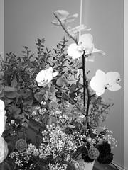 harada-flowers-90 (annie harada) Tags: flowers hana blumen fleurs bouquet noir et blanc black white