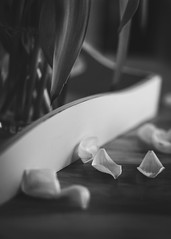 As time goes by (Aperturized) Tags: flower nature plant tulip fading time blackandwhite monochrome