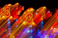 Melbourne Lantern Festival 2019 (peterriordan70) Tags: lanternfestival longexposure melbourne night