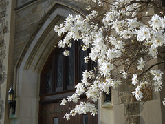 14/52 -- 2019 -- Welcoming (Pandora-no-hako) Tags: project52 magnolia white flower tree spring church door indianapolis indiana 2019