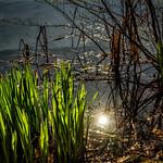 Sonne im Teich thumbnail