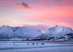 Arctic sunset (Reidar Trekkvold) Tags: kvæfjord landscape natur nature nordnorge norge norway rød sea seascape seaside sjø sunset troms vinter water winter