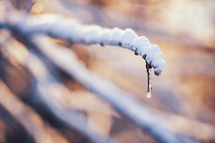 Frozen (Pásztor András) Tags: winter forest snow nature ice white plant drop park closeup cold outdoor frost natural beauty beautiful water frosty trees dslr full frame nikon d700 hungary andras pasztor photography sigma 70300mm