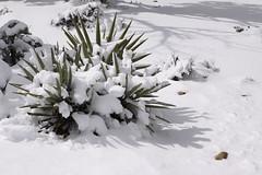 IMG_8670 (patterpix) Tags: grandcanyon arizona snow trees winter canyon storm