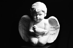 White (roanfourie) Tags: flickrlounge saturdaytheme itsallwhite angel nikon d3400 tamron sp af 60mm diii dx raw gimp 2019 february