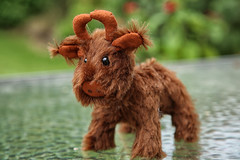 Highland Coo (crafty1tutu (Ann)) Tags: handmade sewing mohair fur miniature small animal cow highlandcattle collectable handsewn glasseyes fullyjointed crafty1tutu canon5dmkiii canon24105lserieslens anncameron
