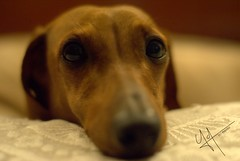 Candy01 (117 PHOTO) Tags: candy dog can perro friend amigo bathroom baño faucet llave lavatory soap jabón