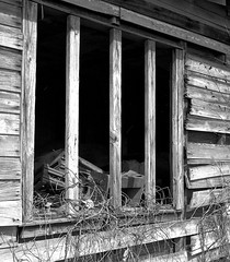 Chilton County, Alabama (RickC.) Tags: alabama south homestead abandoned wood weathered agfa apotar folding 6x6 120 bw ilford fp4 ilfosol3 bwfp