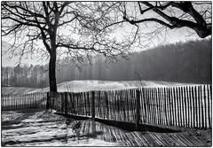 Fence (Werner Koenig) Tags: boeckten schweiz switzerland snow schnee winter tree fence zaun