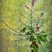 Ikebana Still Life #5