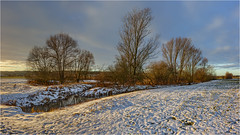 Biotop (Robbi Metz) Tags: germany bavaria landscape trees biotope snow sunrise colors canoneos