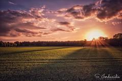 Sunset at the Field (Stathis Iordanidis) Tags: nature serenity tranquility silence farmland grassland grass countryside landscape sundown sunlight sun sunset