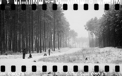 Bronica SQ-A-060-001 (michal kusz) Tags: bronicasqa zenzanon 110 135 35mm 120to135 frame film bw blackandwhite landscape forest format monochrome medium monochromatic trees snow poland