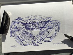 When in Florida... (schunky_monkey) Tags: nature drawing draw sketching sketch fountainpen penandink ink pen illustration art shell sea seafood beach ocean claw claws crab
