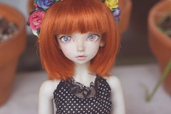 [051/365] Primrose (Ise-Bandit) Tags: abjd bjd asian ball joint doll dollfie resin luts kid delf kdf wintery12 wintery 12 primrose