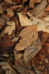 Leaves (historygradguy (jobhunting)) Tags: easton ny newyork upstate washingtoncounty leaf leaves