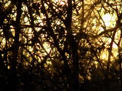 Sunset Silhouette. (dccradio) Tags: lumberton nc northcarolina robesoncounty outdoors outdoor outside nature natural backyard march thursday thursdayevening evening goodevening nikon coolpix l340 bridgecamera sun settingsun sunset branch branches tree trees treebranch treebranches treelimb treelimbs woods wooded forest silhouette sky eveningsky