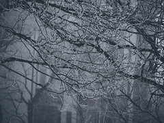 Late winter on early spring morning (anna.letoile) Tags: morning tree trees branches bw blackwhite blackandwhite monochrome snow fog mist olympus olympusomdem10markii olympusmzuiko40150mmf4056r bokeh flickraward
