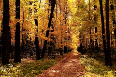 In the autumn park (prokhorov.victor) Tags: природа пейзаж лес парк осень деревья