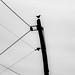 crow on pole