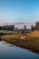 Sunset (HelloI'mJulia.) Tags: zebra malawi africa safari fujixt2 fuji fujifeed fujifilmxt2 fujifilm sunset 35mm 35mmf14