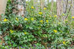 Flowers in the forest (a7m2) Tags: loweraustria rodaun perchtoldsdorf föhrenberge parabluiberg wienerwald natur wandern spazieren blumen gräser bäume heide wanderwege erholung