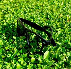 In Dreams I Walk With You (Ronald Hackston) Tags: rayban shades sunglasses black green privet hedge