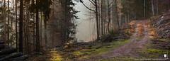 Forêt de montagne vosgienne, Alsace, France (regard graphiste) Tags: 2018 france routeforestière nature hautrhin brumeux brume chemin bois massifvosgiens parcdesballonsdesvosges montagne parcnaturelrégionaldesballonsdesvosges communautédecommunesdelavalléedekaysersberg alsace régiongrandest hiver vosges grandest forêt forestier natural