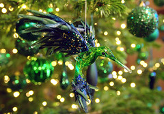 Chatsworth House Christmas decorations (Tony Worrall) Tags: christmas xmas annual festive palace royal seat duke place art view event show location chatsworthhouse items photos derbys derbyshire devonshire uk england home ornate english posh pretty nice beauty update visit area attraction open stream tour country item greatbritain britain british gb capture buy stock sell sale outside outdoors caught photo shoot shot picture captured ilobsterit instragram decorations
