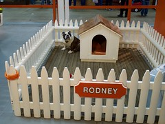 Free Rodney! (Pak T) Tags: bulldog dogs fair fairgrounds fence massachusetts rodney springfield thebige