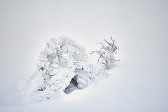 whichDirection (tobias-eger) Tags: snow winter hornisgrinde germany blackforest nature foggy fog trees white abstract natur schnee weiss bäume schwarzwald nebel abstrakt