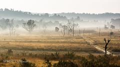 Misty Morning at Uttarakhand (NORDIC Lightbeams) Tags: ed40150mmf28 indien goldenestunde nordindien gegenlicht rajajinationalpark northindia olympuszuiko backlight goldenhour mft microfourthirds lansdowne uttarakhand in