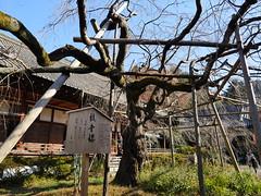 京都山科毘沙門堂 (Eiki Wang) Tags: 京都 毘沙門堂 山科 kyoto yamashina