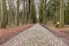 Oude weg (dyjaf) Tags: bosweg bos bomen