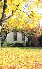 Autumn Sanctuary in the City IMG_1259 (Shutterbuglette) Tags: composition church autumn british columbia oldestcityinbritishcolumbia formercapitalcityofbc cityonthefraserriver oldchurch yellow autumncolour stainedglasswindows arichtecture oldtrees autumnleaves verticle shade bright colourful inagroup