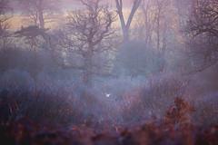 ... (Michael Lee - mplee.com) Tags: green purple landscape woods trees owl barn totteridge common london spring winter haze fog woodland mist