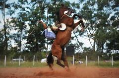Rojas e Bico Branco (Eduardo Amorim) Tags: gaúcho gaúchos gaucho gauchos cavalos caballos horses chevaux cavalli pferde caballo horse cheval cavallo pferd pampa campanha fronteira quaraí riograndedosul brésil brasil sudamérica südamerika suramérica américadosul southamerica amériquedusud americameridionale américadelsur americadelsud cavalo 馬 حصان 马 лошадь ঘোড়া 말 סוס ม้า häst hest hevonen άλογο brazil eduardoamorim gineteada jineteada