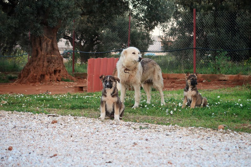 Athens, Greece blog