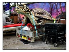 TURTLE POWER (StockCarPete) Tags: turtle animal london uk trailer hackneywick