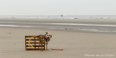 sized_HP20190118-144822 (Hetwie) Tags: strand natuur goedereede bruc zee sea water beach nature zuidholland nederland nl